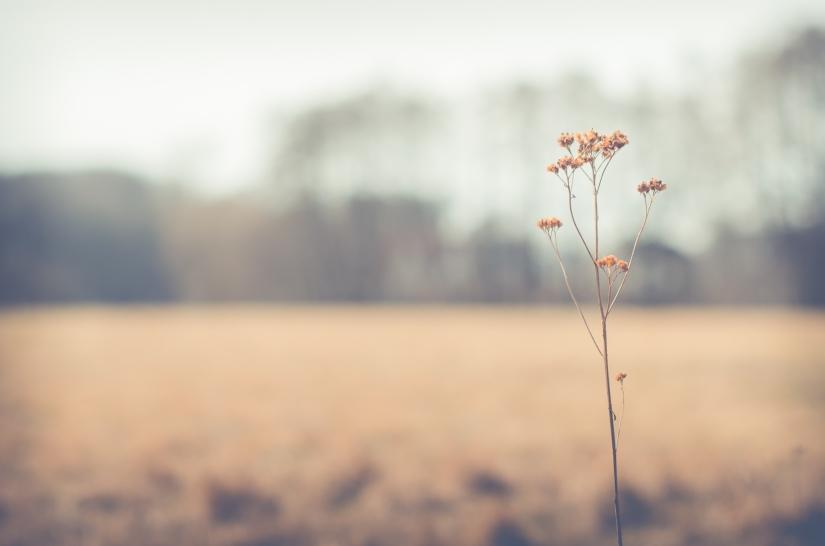Frühling – er istda