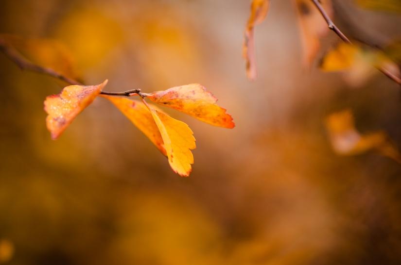 So schön ist der Herbst…