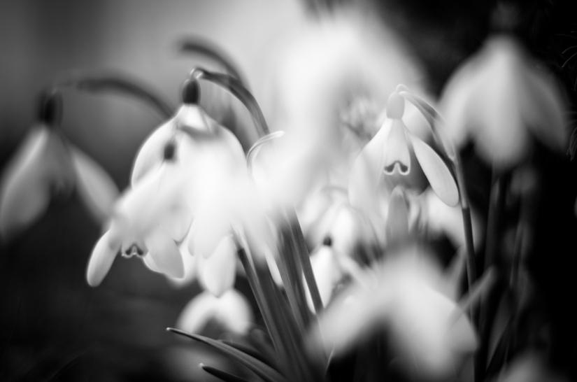 Projekt Graustufe: Frühling amStart