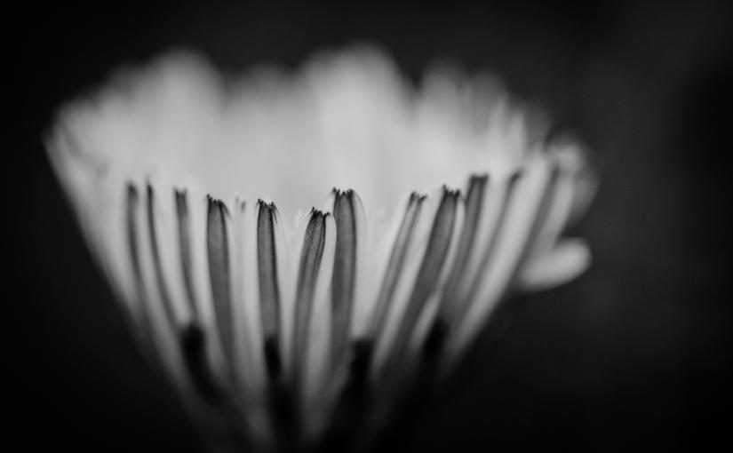 Monochrome Momente: Garten