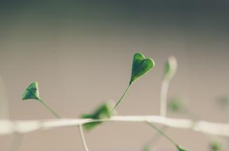 Zweitliebefotografie_Herbst_Herz