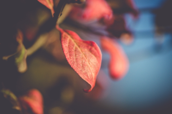 Zweitliebefotografie_Herbst_rot