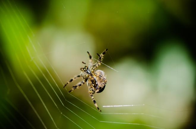 Zweitliebefotografie_Spinne