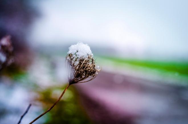 zweitliebe_winterreste
