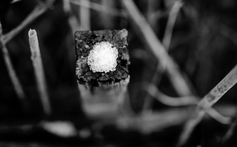 Gesucht und gefunden:Winterreste