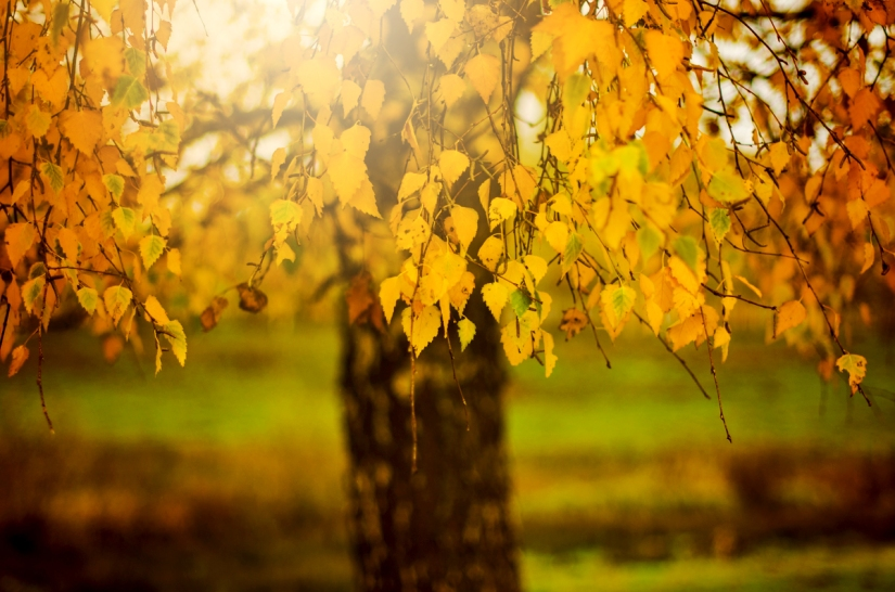 Herbstsaison