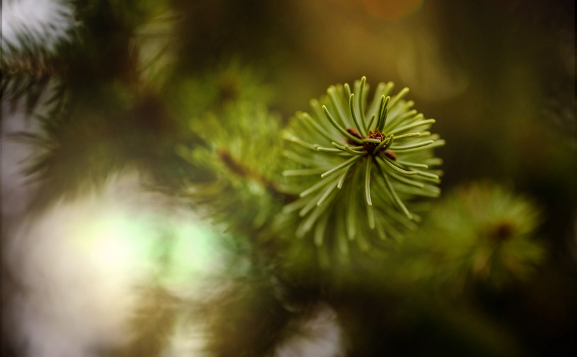 Dezembergrün